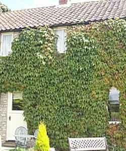 kirkdale Cottage